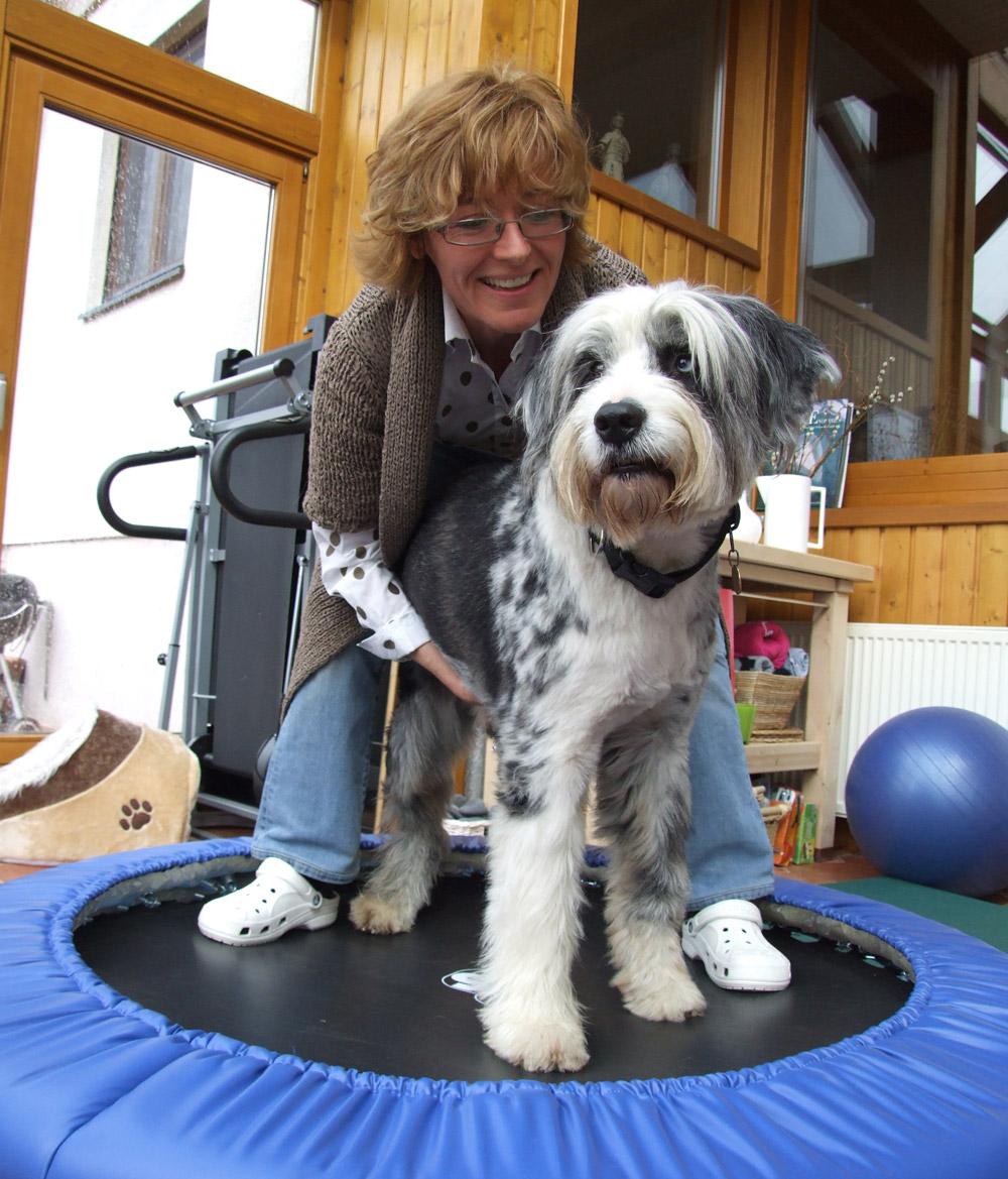 Claudia Kniese Physiotherapie für Hunde