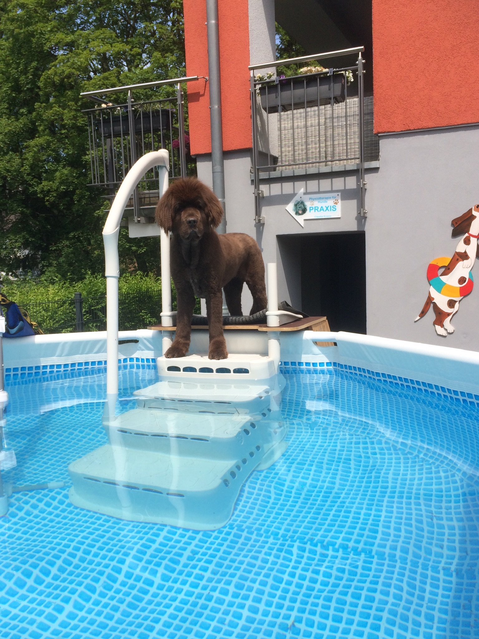 Therapeutisches Schwimmen für Hunde