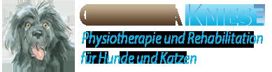 Physiotherapie Hunde – Hundephysiotherapie Bewegungstherapie für Hunde