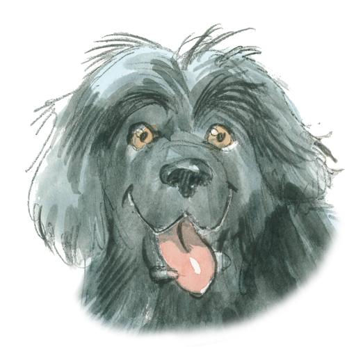 physiotherapie-hunde