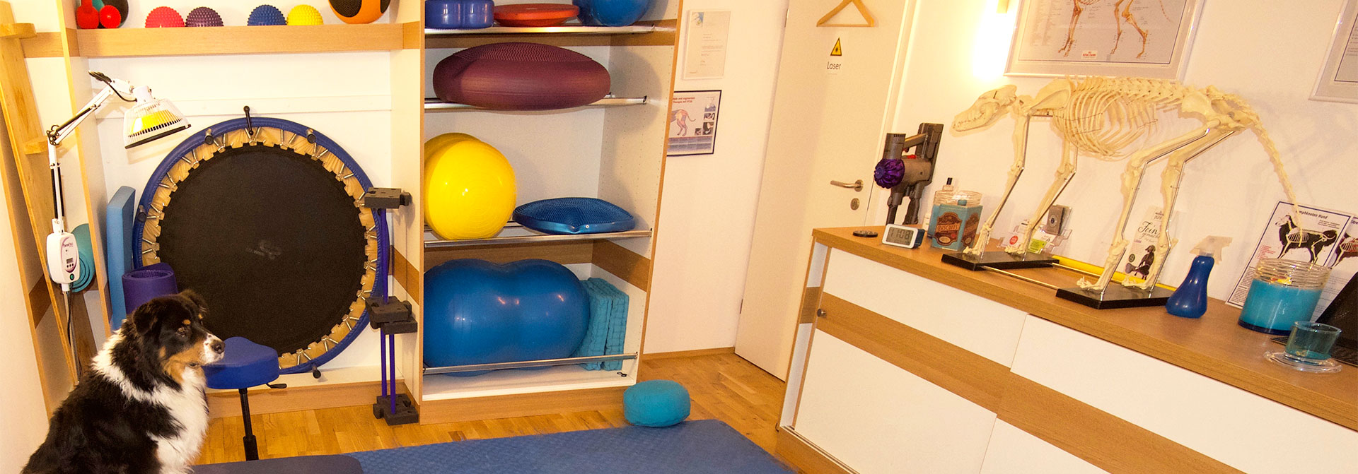 Praxis Physiotherapie Hunde